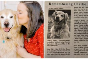 Remembering Charlie: Family Sweet Obituary for Dog Goes Viral