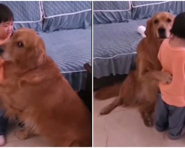 Loyal Dog Protects Crying Girl from Angry Mom Who's Scolding the Kid