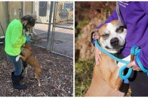 Grateful Dog Won't Stop Hugging People after Getting Rescued