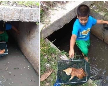 Brave Kid Hailed a Hero for Saving Kitten from Storm Drain