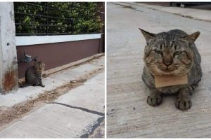 Cat Goes Missing for 3 Days, Returns Home with Note from 'Loan Shark'
