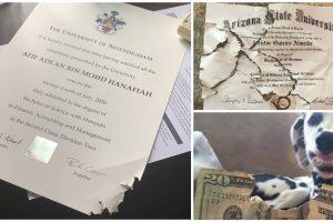 Cat Eats Student's Graduation Certification, Netizens Share Similar Photos
