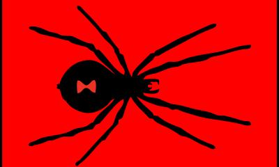 pest black widow spider