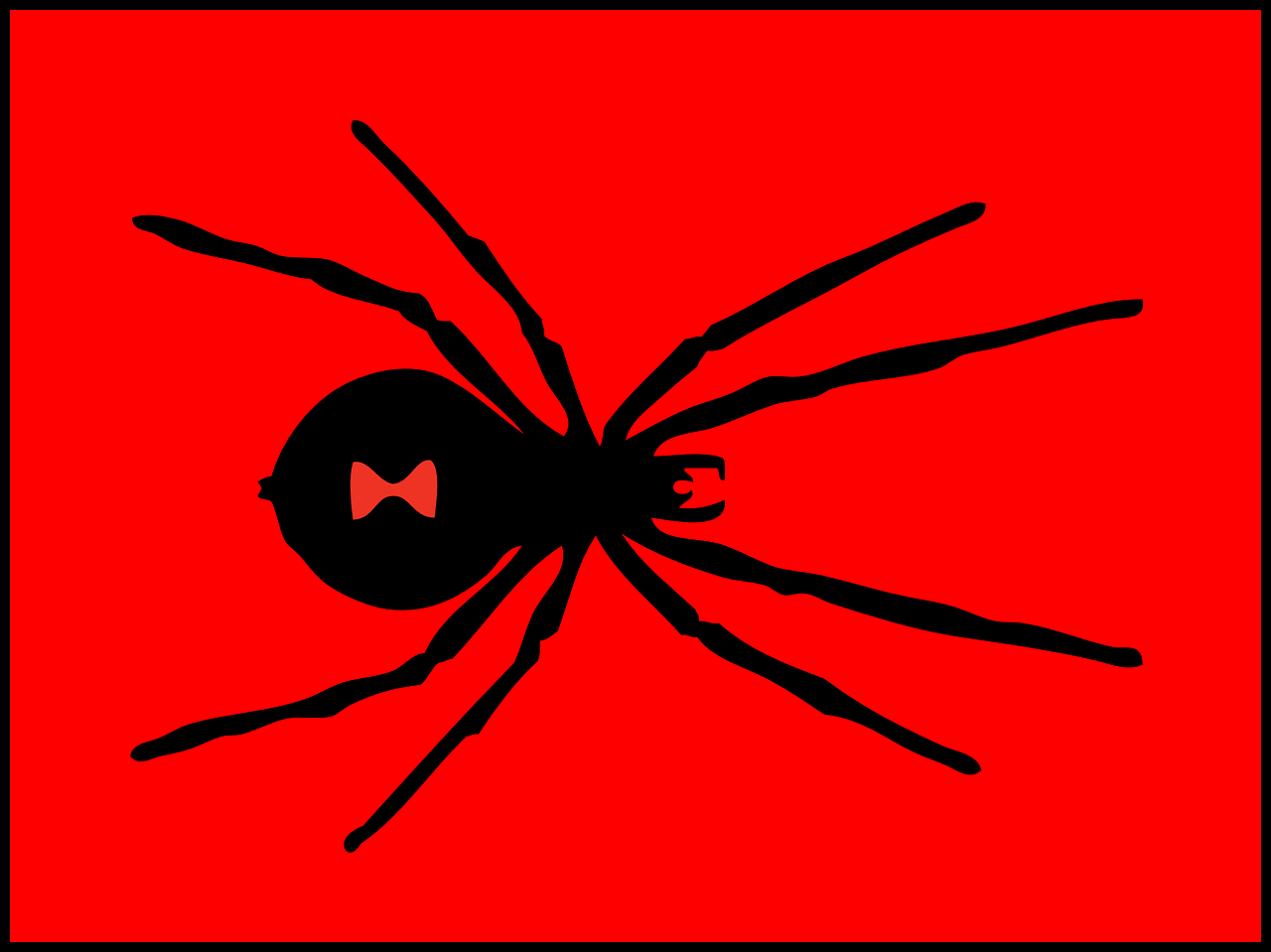 pest black widow spider