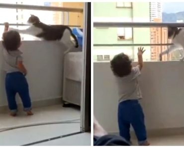 VIDEO: Protective Pet Cat Keeps Trying to Get Toddler Off the Balcony Railings