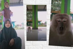 Wild Monkey Snatches Girl's Phone after Watching Her Make a TikTok Video