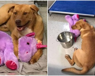 Stray Dog Keeps Taking Unicorn Toy from Street Vendor, Authorities Finally Bought it for Him