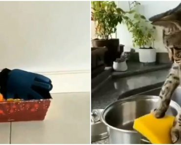 Hilarious Video of Cat 'Cleaning' the House Goes Viral