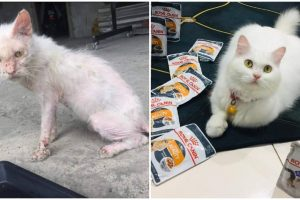 """Stray Cat Now Lives Spoiled Rich Life, """"Rags to Riches"""" Story Goes Viral"""