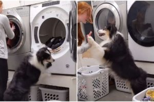 Adorable Dog Helps Wash Owner's Clothes