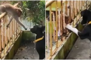 Viral Video Shows Monkey Kissing Dog Best Friend's Paw