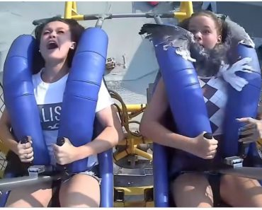 Seagull Crashes into Girl on Amusement Park Ride Moving 120 km Per Hour