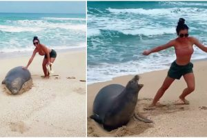 Woman Nearly Bitten by Seal She Touched at Beach, Gets in Trouble with Authorities