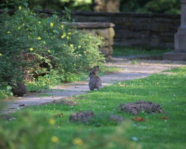 5 Animals That May Try to Make a Home in Your Yard