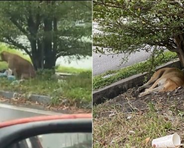 Rain or Shine, Poor Dog Waits For Months At the Spot It Was Left Behind By Owners