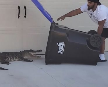 Impressive Video Shows Dad Capturing Alligator with Trash Can to Protect Kids
