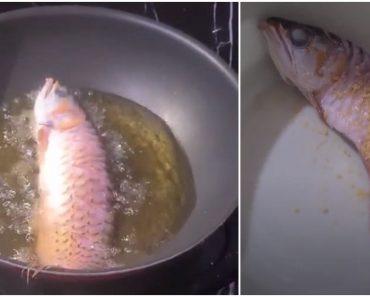 Angry Wife Cooks Husband's Expensive Arowana Because He Didn't Clean Its Tank